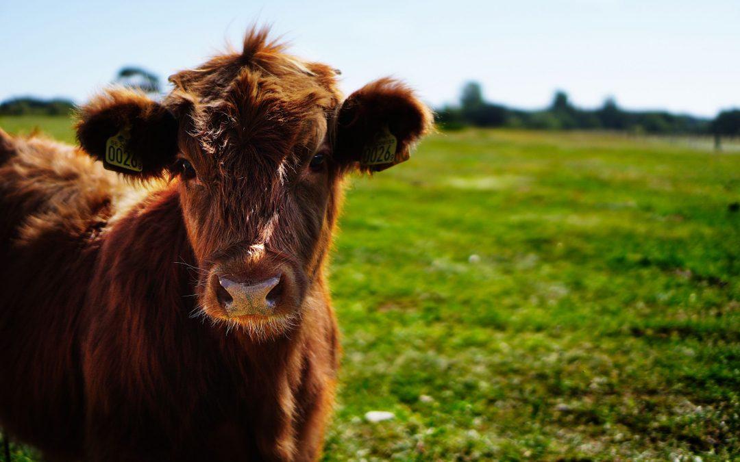 Dierenwelzijn en ethiek