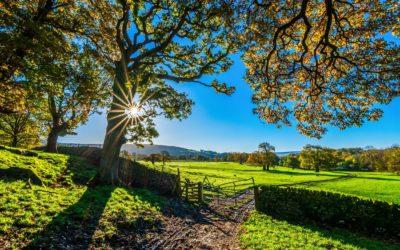 De verkaveling in het kader van de nieuwe omgevingsvergunning