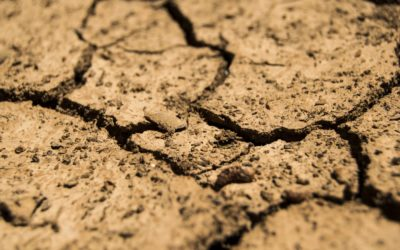 Structuur- en bodemschade, een juiste schadediagnose staat garant voor een correct bodemherstel